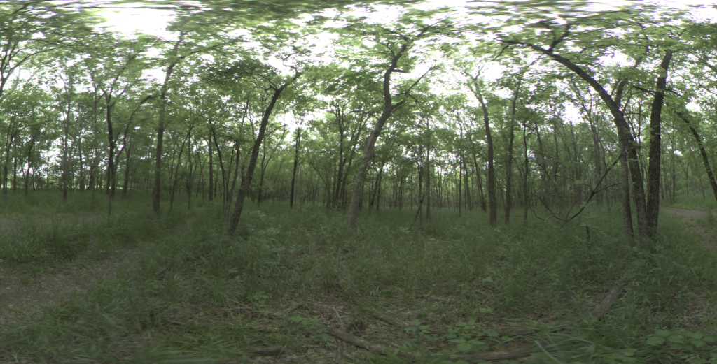 Forest with canopy